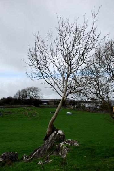 lakes - rock tree