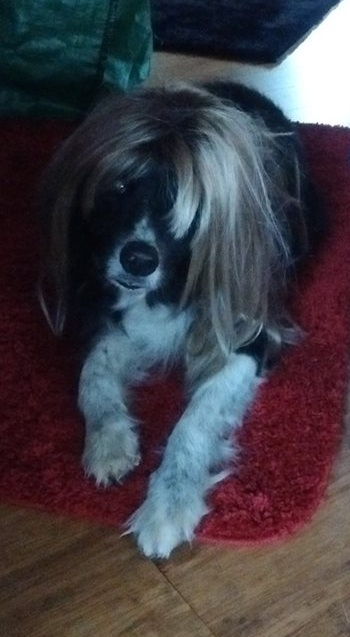dog with hair